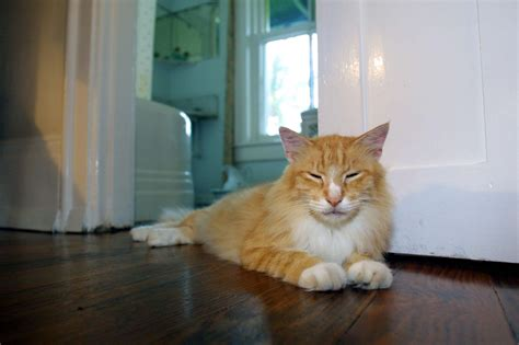 Hemingway's six-toed cats keep all nine lives after