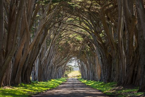 Cypress Tree Tunnel, Point Reyes, CA – Jane Lurie Photography
