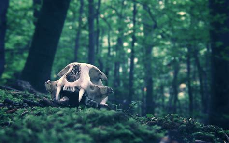 4 Skull HD Wallpapers   Background Images - Wallpaper Abyss