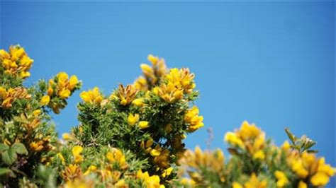 BBC - Wales - Nature - Wildlife - Plants and climate