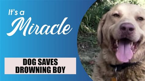 Dog Saves Drowning Boy - It's a Miracle - YouTube