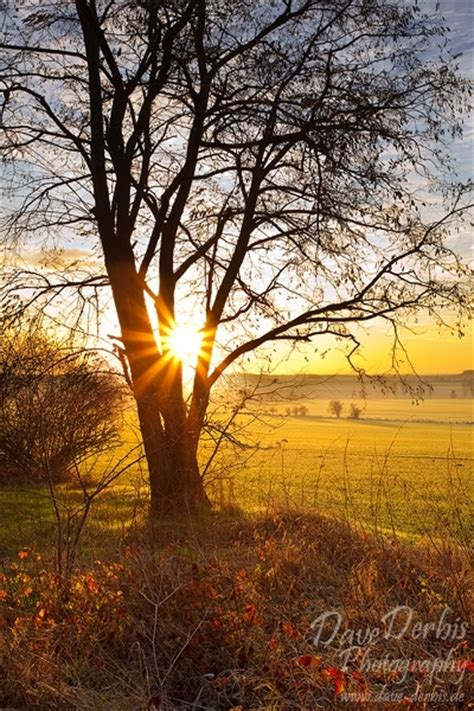 Autumn Morning :: Brumby, Germany :: Dave Derbis
