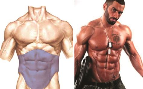 Body Fat Percentage Needed For Your Abs to Show