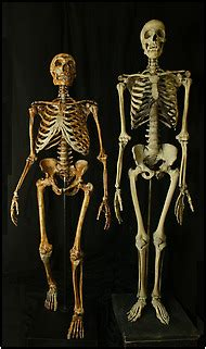 Many of us have Neanderthals in our family tree, just as