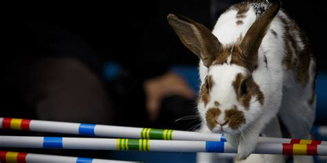 There's Such A Thing As A Bunny Hop Competition, And It